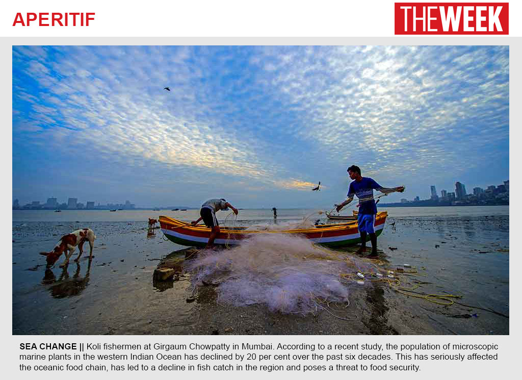 The Week photo feature on declining phytoplankton in the western Indian Ocean
