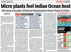 Phytoplankto feels Indian Ocean Heat