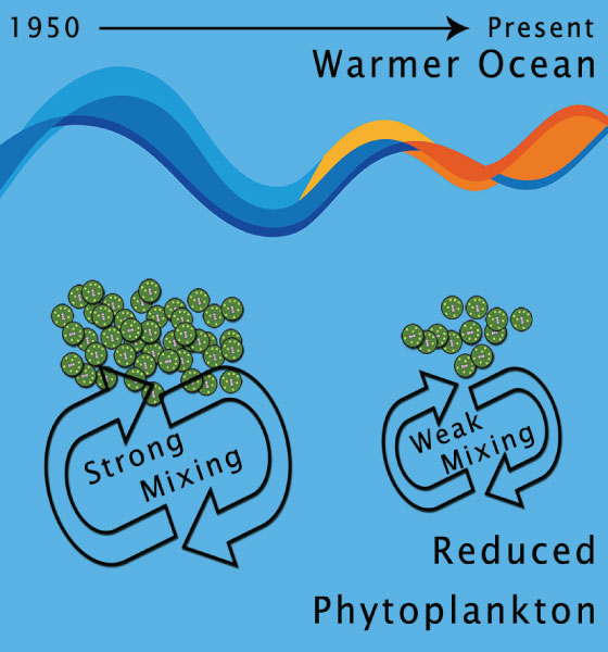 Marine Phytoplankton in a warming Indian Ocean